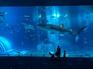 美ら海水族館は貸し切り状態